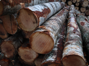 Read more about the article Russia creates wood export company